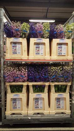 Maak ons GEK @awestendorp! Weer een fantastische kar DELPHINIUM op de #bloemistenklok in naaldwijk