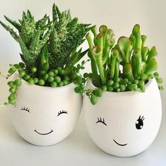 16 Types of Succulents You Can Add to Your Garden Ogre Ears Crassula Ovata Succulent Plant Crassula Ovata, Crassula Succulent, Succulent Pots, Succulent Gardening, Succulent Care, Succulent Landscaping, Succulent Arrangements, Landscaping Ideas, Organic Gardening