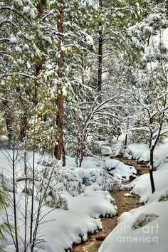 Snowy Mountain Creek Prescott Arizona Photograph  - Snowy Mountain Creek Fine Art Print- Taken in Prescott, Arizona By Diana Graves