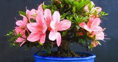 10 Plantas que purifican el aire al interior de tu hogar