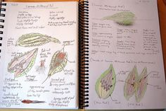 Wonderful details on this milkweed nature journal.