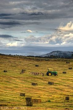 Fall Harvest - Yampa Valley, Steamboat Springs, CO.