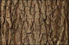 Картинки по запросу изделия из коры дерева