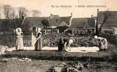 Op het bleekveld in 's-Heer Arendskerke. Prentbriefkaart van omstreeks 1910 (ZB/Beeldbank Zeeland)