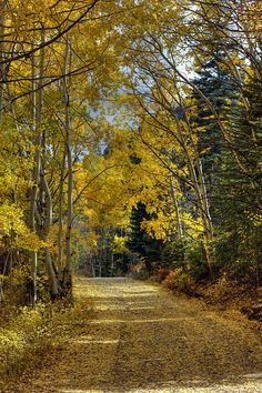 Fall in Taos, New Mexico where the high dessert collides with colorful mountain scenery.