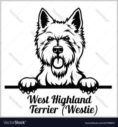 West highland terrier - peeking dogs - breed face vector image on VectorStock West Highland Terrier, Highlands Terrier, Top Dog Breeds, Dog Icon, Dog Vector, Vector Stock, Dog Silhouette, Silhouette Studio, West Highland White