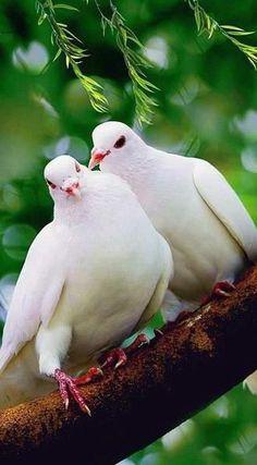 ....white doves....