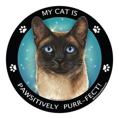 Siamese Cats Blue Point Show the world how much you love your pets with this magnet. Magnetic back allows you the freedom to easily reposition without damage or mess. - Easy on - Easy off. - Perfect for cars, trucks, RV's re Tonkinese Cat, Birman Cat, Siamese Kittens, Cats And Kittens, Ragdoll Cats, Gato Munchkin, Seal Point Siamese, Love Your Pet, Russian Blue