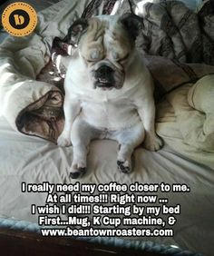 The major breeds of bulldogs are English bulldog, American bulldog, and French bulldog. The bulldog has a broad shoulder which matches with the head. Bulldog Pics, English Bulldog Puppies, Bulldog Meme, Mini English Bulldogs, English Bulldog Funny, Funny Dog Memes, Funny Dogs, Funny Animal Pictures, Cute Funny Animals