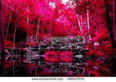 color fantasy forest .
