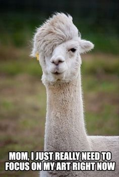 llamas are totally the hipsters of the animal world