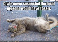 Clyde never suspected the local pigeons would have tasers.