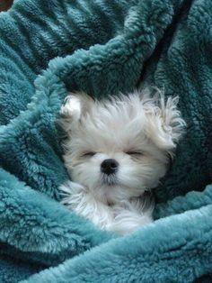 ❧ Pets-Animaux de compagnie ❧