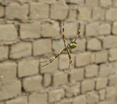 El lado aterrador de un jardín de flores... la araña en primer plano!