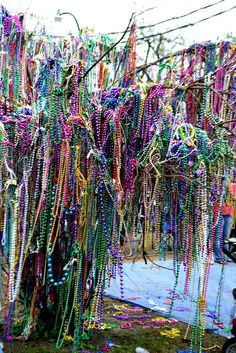 Mardi Gras Bead Tree in Mobile, Alabama. Mobile is actually the home or the original Mardi Gras. New Orleans began hosting Mardi Gras years later. Mabon, Samhain, Mardi Gras Carnival, Mardi Gras Party, Louisiana Homes, New Orleans Louisiana, Beltane, Voyage Usa, New Orleans Mardi Gras