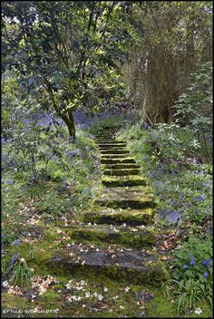 Steps in Waterford Gardens, Ireland, photo by Ernie Watchorn Beautiful Gardens, Beautiful Landscapes, Nature Aesthetic, The Secret Garden, Secret Gardens, Dream Garden, Aesthetic Pictures, Pathways, Garden Paths