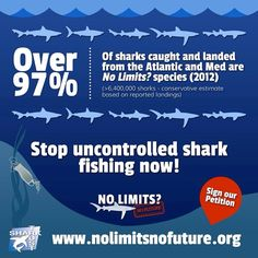 Help the Shark Trust stop uncontrolled shark fishing! Visit http://www.nolimitsnofuture.org/ #nolimitsnofuture #sharktrust
