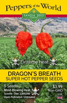 The Dragon's Breath pepper is a super-hot, mind-blowing, out of this world pepper. It has a reported peak heat of 2.48 million Scoville heat units and has been submitted to the Guinness Book of World Records for consideration as the hottest pepper in the world. There is not a lot of solid information yet about its average heat range or overall stability. Time will tell where the Dragon's Breath officially falls in the ranking of super-hots. Will it be the hottest?
