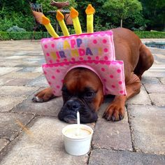Birthday Boxer!