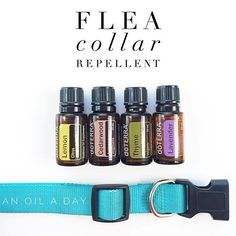 I thought I would share how we help our goldendoodle, Stella, avoid fleas naturally- and without the skin irritations that are common in other formulas.  Mix the following in a medium bowl 1/2 tsp. rubbing alcohol 4 garlic oil capsules 1 drop of each of the following dōTERRA essential oils- Cedarwood, Lavender, Lemon, Thyme  Soak your pet's collar in this solution for 25-30 minutes & then lay it out to dry. Once dry, it's ready for them to wear!