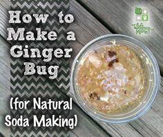 How to Make a Ginger Bug Natural Soda Starter - Wellness Mama