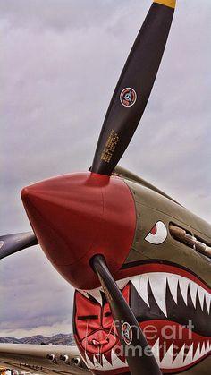 Flying Tiger P-40 Photograph  - Flying Tiger P-40 Fine Art Print