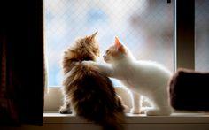 Bestfriend Cats Check more at http://hdwallpaperfx.com/bestfriend-cats/
