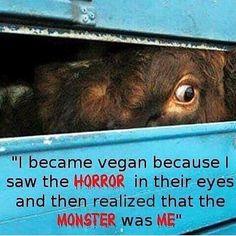 Rp  @myveganpath . I became vegan because I saw the horror in his eyes and I realized that the monster was me . #vegan #goingvegan #govegan #veganbrasil #veganism #veganismo #vegano #vegana #veggie #vegetarian #vegetarianismo #vegetariano #vegetariana #plantbased #plantbasedlife #plantbaseddiet #nomeat #meatfree #animallover #compassion #crueltyfree #segundasemcarne #health #healthy #animalrights #eatclean #meatless #vegangirl #veganpower