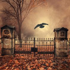 35PHOTO - Caras Ionut - The house behind the gate