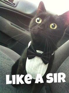 like a sir!!!!