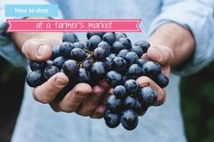 How to shop at a farmers market some useful tips from Loulou Zoo