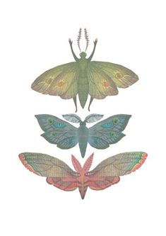 Saturn Moths- A4 giclee print on Etsy, $18.00