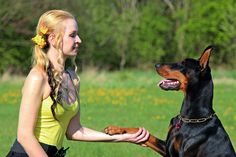 The Tips You Require For Better Dog Ownership Success Are Here ** Check out this great article. #DogsCareGuide