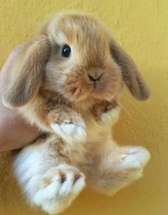 70 Trendy Pet Bunny Names Baby Cute Little Animals, Cute Funny Animals, Cute Dogs, Cute Baby Bunnies, Cute Babies, Cute Bunny Pictures, Funny Pictures, Pet Rabbit, Pet Bunny Rabbits