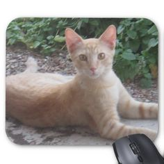 A Cat Mouse Pad
