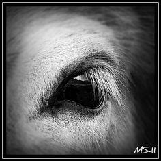 Horseeye Eye of the Horses #HorseHealth #HorseColic www.loveyour.horse