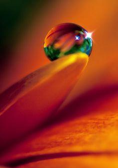 Water drop on flower petal
