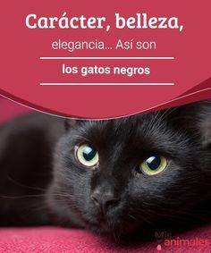 Carácter, belleza, elegancia… Así son los gatos negros  Hoy queremos hacer un homenaje a los gatos negros, por su gran belleza,carácter y su increíble elegancia, dejando atrás supersticiones. #belleza #misterio #curiosidades #gatos