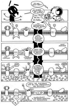 Photosynthesis comic...genius!
