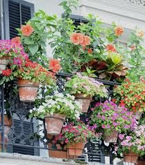 french balcony gardens - Google Search
