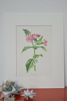 """This beautiful original antique print originally came from a book that was published in c.1902 called """"Familiar Wild Flowers"""". The illustration was drawn by Professor Frederick Edward Hulme (1841–1909) who trained at the Royal School of Art, and in 1886 became Professor of Freehand and Geometrical Drawing at Kings College, London. A keen amateur botanist, he was elected a Fellow of the Linnaean Society in 1869. Familiar Wild Flowers was his most famous work. The Victorian printing method…"""