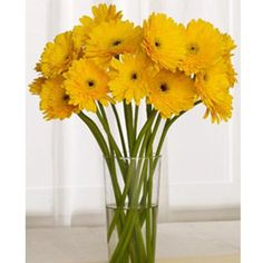 or maybe I'll have fresh gerbera daisies instead in my black yellow gray bedroom :o) Yellow Flowers, Wild Flowers, Yellow Gray Bedroom, Orange Blossom, Flower Beds, Room Colors, Black N Yellow, Wedding Events, Weddings