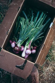 Radishes are still in season! Try them in any dish for an added crunch or alone with a little salt and butter!