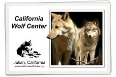 While the town of ‪#‎Julian‬ is well known for its apples and, a less famous fact might be that it's also home to one of the major ‪#‎wolf‬ recovery centers in the U.S. The California Wolf Center is located about 5 miles outside Julian & 35 miles from Palm Canyon. The center was founded in 1977 w/ the mission of ecosystem conservation, increasing awareness & understanding of wolves through education and public outreach…