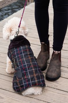 Don't forget your furry friends this Christmas! Keep them warm and cute with a tartan coat from @backcountry! #ad #findyourbackcountry Ice Queen, Dog Coats, Yule, Leather And Lace, Tartan, Cute Animals, Forget, Warm, Pets