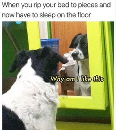 New memes funny kids hilarious animal pictures ideas Memes Humor, Funny Dog Memes, Funny Animal Memes, Funny Animal Pictures, Cat Memes, Funny Animals, Cute Animals, Animal Pics, Hilarious Pictures