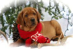 All ready for Santa!!!!