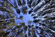 Eulenblick mal!: Rund um Wald und Holz