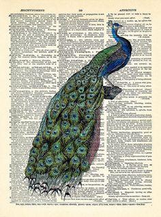 Peacock Art Print Peacock Decorative Art Dictionary Print