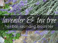 Natural Parents Network: Lavender and Tea Tree Herbal Laundry Booster